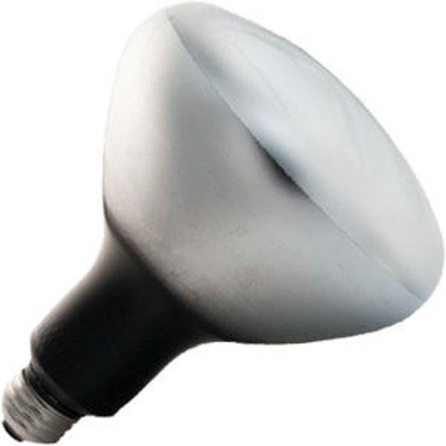 dxb-bulb.jpg
