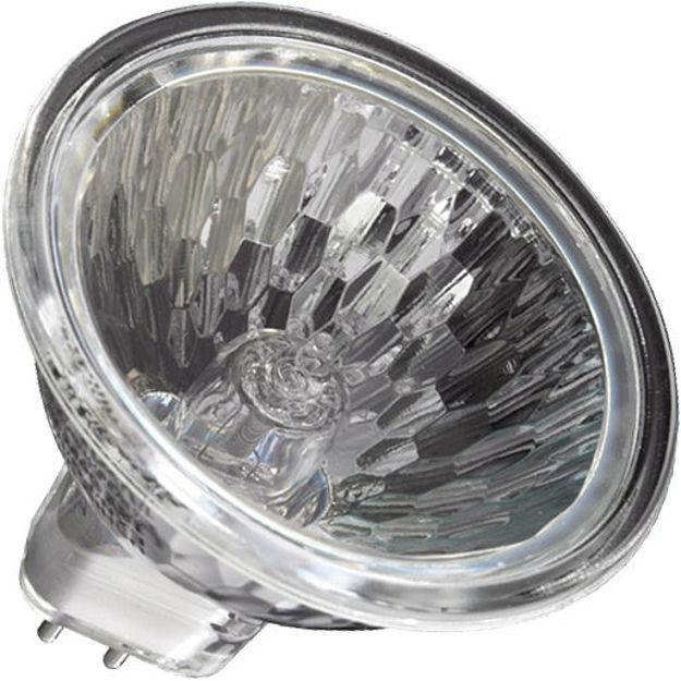 us1003553-bulb.jpg
